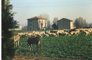 Immagini storiche Brignano Gera d'Adda