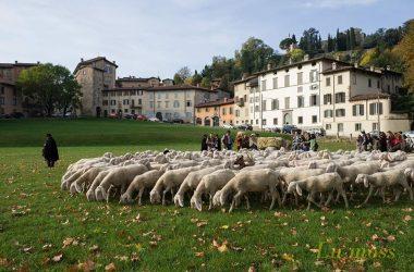 Festival Pastoralismo Bergamo Transumanza