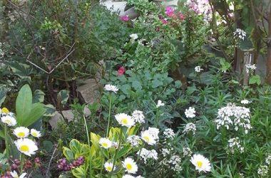 Giardini fioriti Brembo di Dalmine