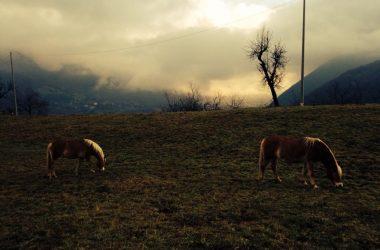 Immagini Gaverina Terme
