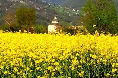 Prato fiorito Almenno San Bartolomeo