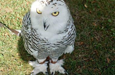 Sagra degli Uccelli Casnigo