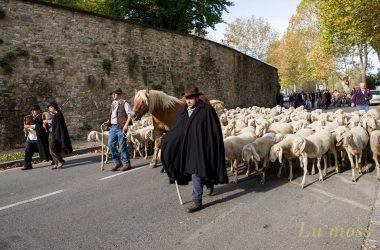 Transumanza Festival Pastoralismo Bergamo
