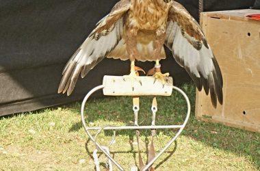 immagini Sagra degli Uccelli Casnigo