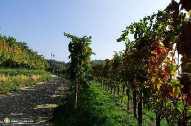 40 Filari di vite Abbazia di Fontanella bergamo