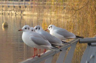 Ammirando-il-lago-Sarnico