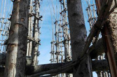 Cattedrale Vegetale Oltre il Colle Immagini