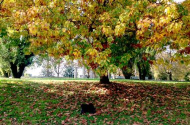 Il parco Goisis Bergamo