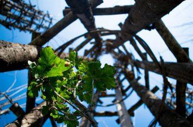 Immagini della Cattedrale Vegetale Oltre il Colle