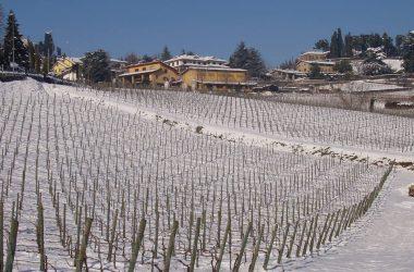 Le vigne di Grumello del Monte