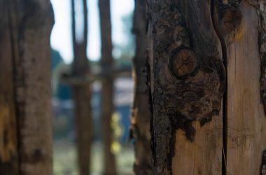 Scorci Cattedrale Vegetale Oltre il Colle