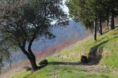 Sentieri Sotto il Monte Giovanni XXIII Bg