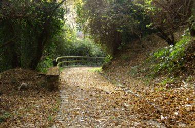 Sentiero per il Santuario Madonna dello Zuccarello - Nembro
