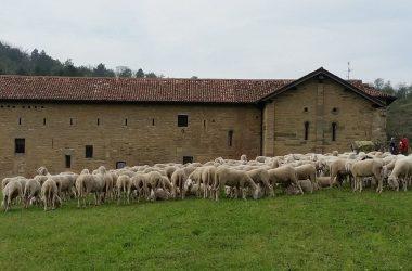 Valmarana Festival Pastoralismo Bergamo